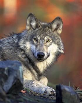 joshritterwolves1.jpg